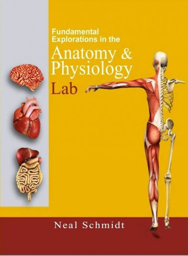 Fundamental Exploration in the Anatomy & Physiology Lab